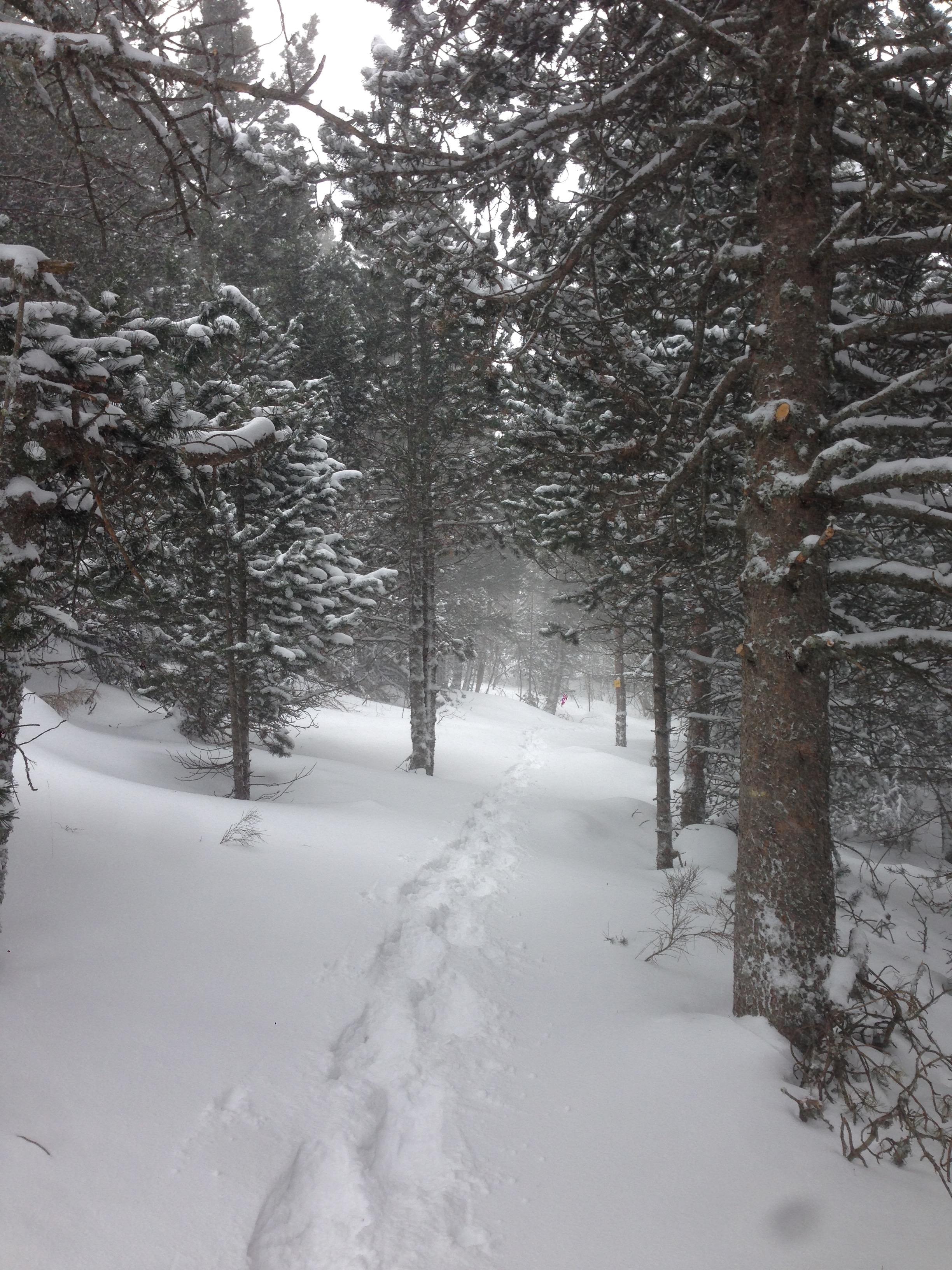 Snowy winter escape