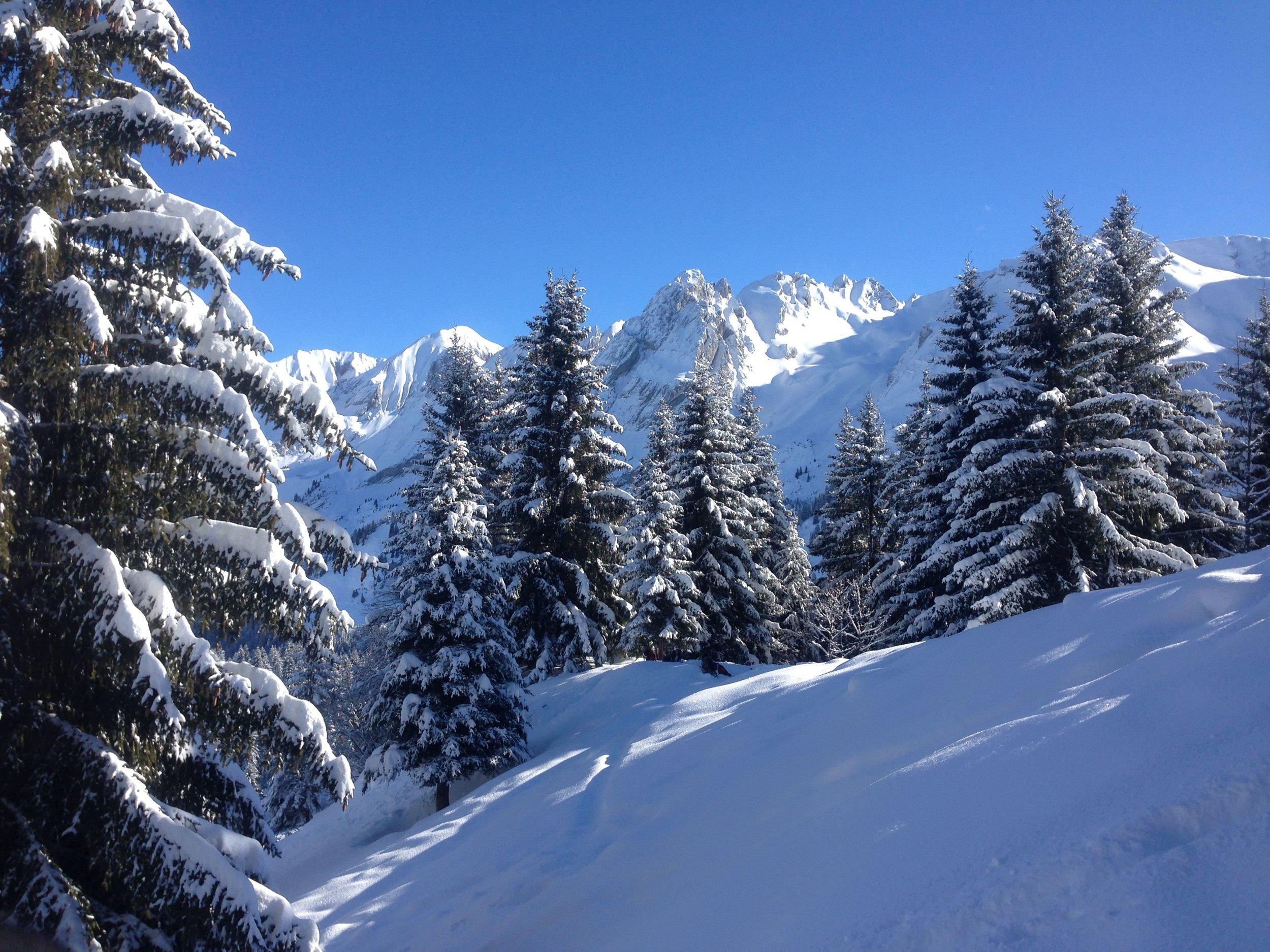 Snowshoe Winter Wonderland