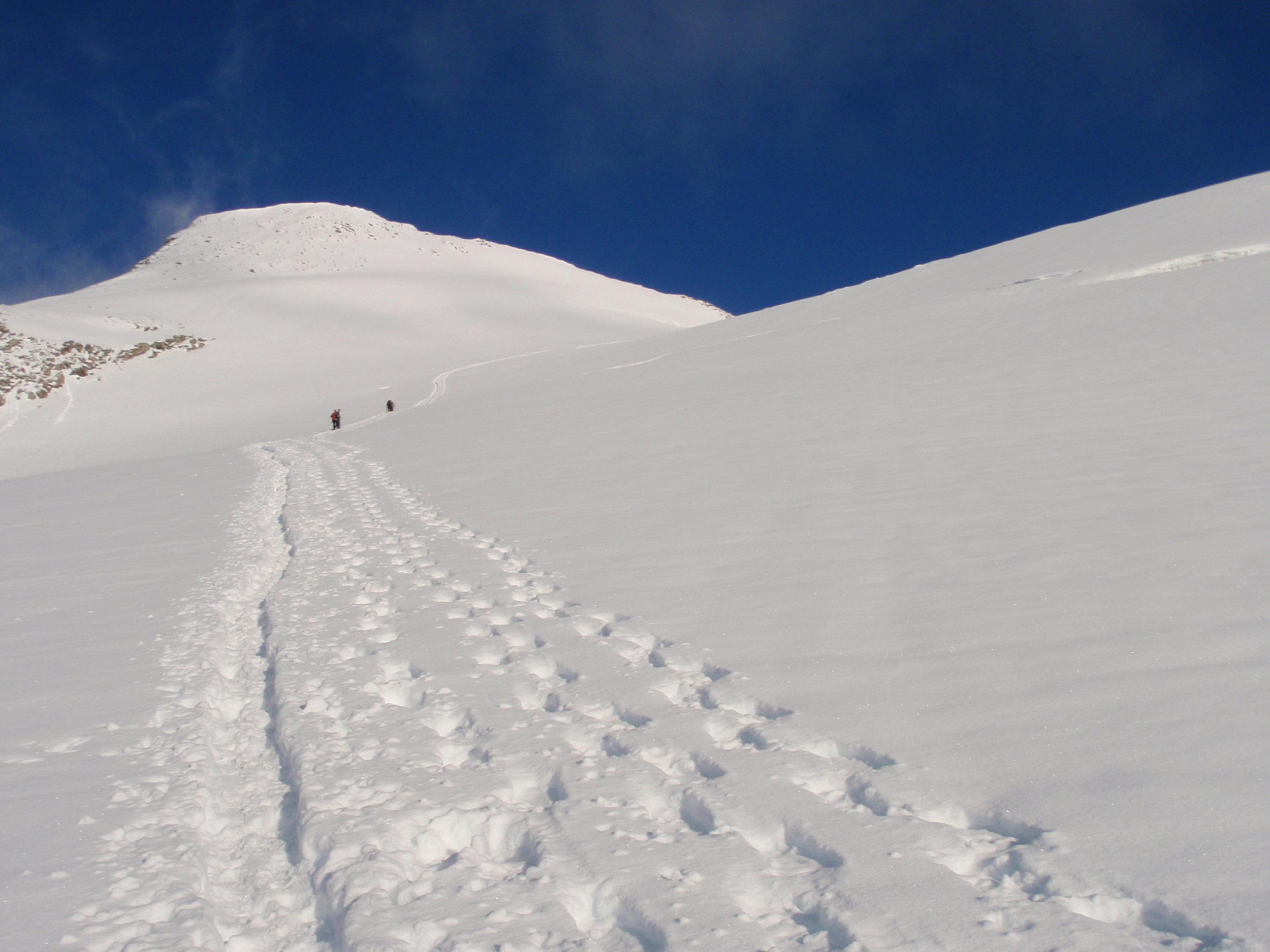 Snowshoe Footprints