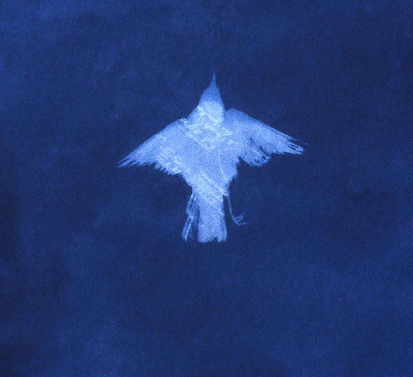 Oiseau cyanotype