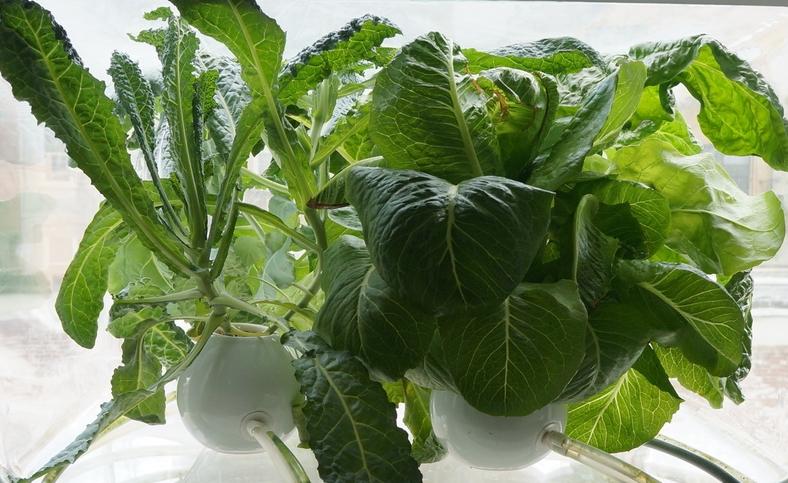 JUNGLE crop.jpg