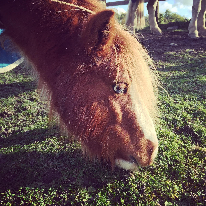iPhone photography | horse | photographer