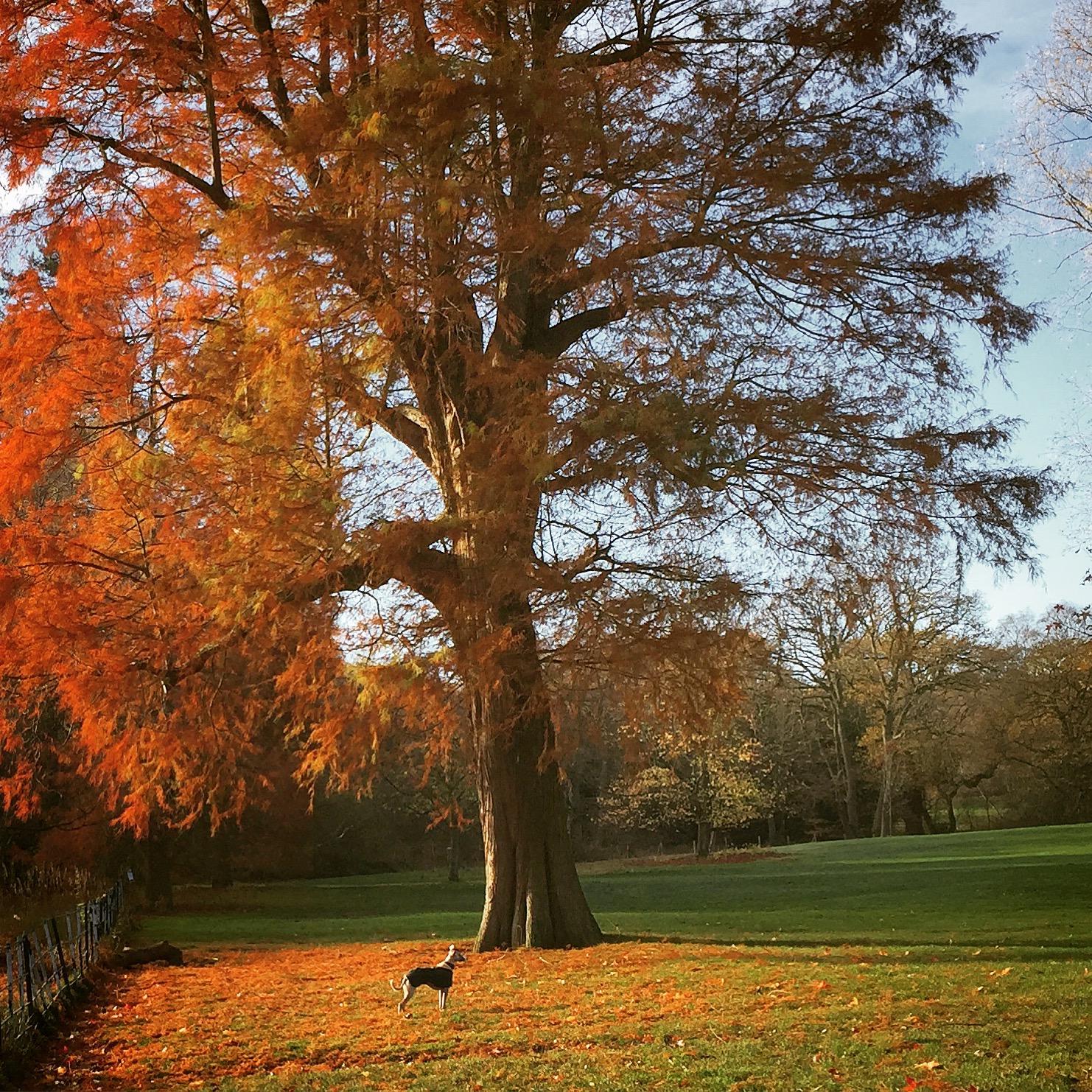 iPhone photography | Hampstead heath | photographer