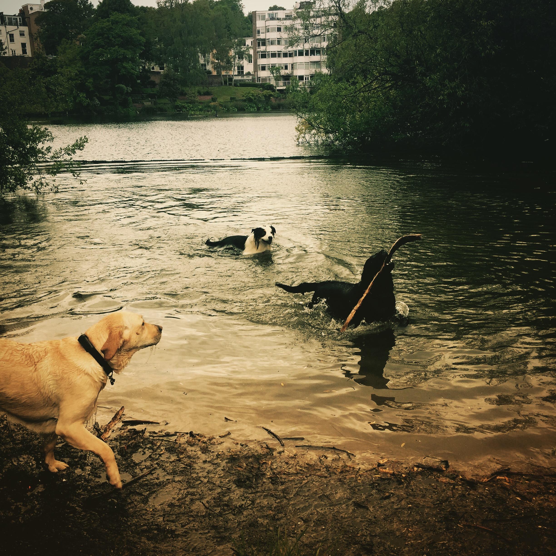 iPhone photography | dog pond | photographer