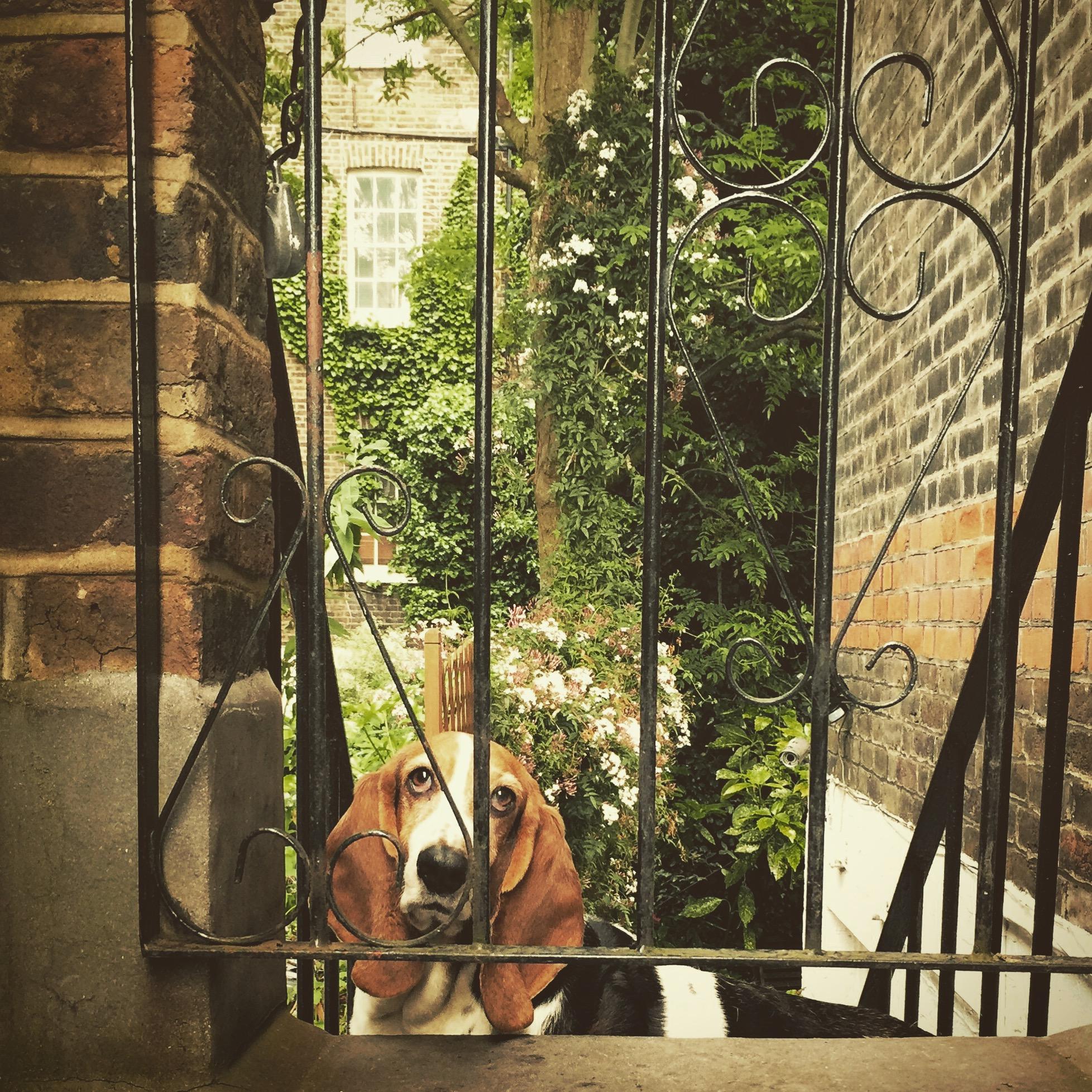 iPhone photography | dog | photographer