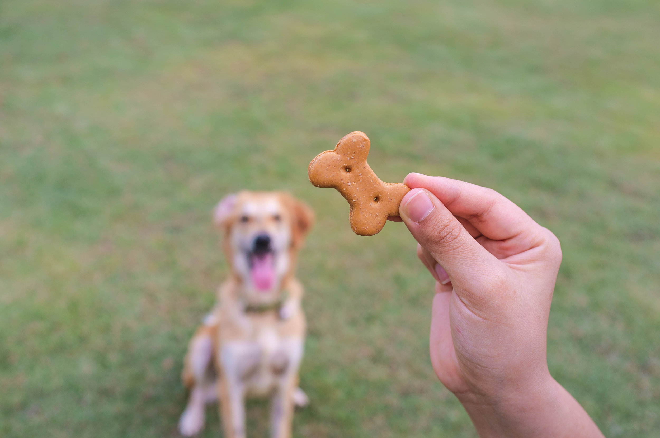 treat dog in background.jpg