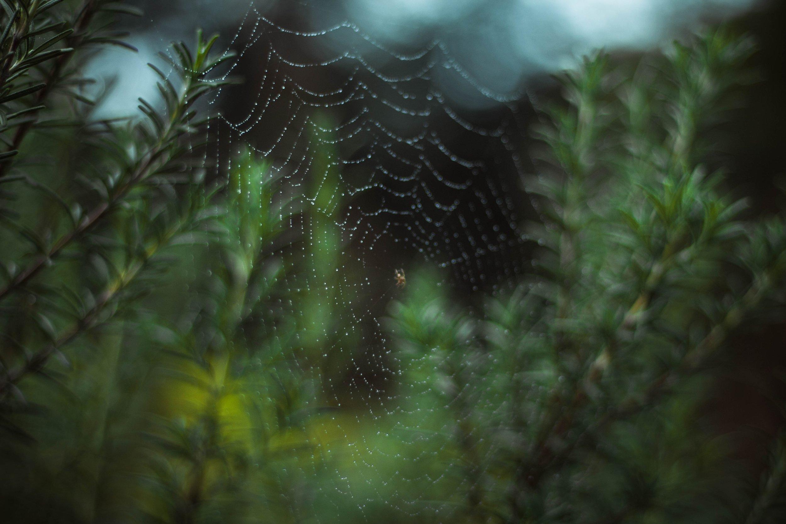 spider web in green.jpg