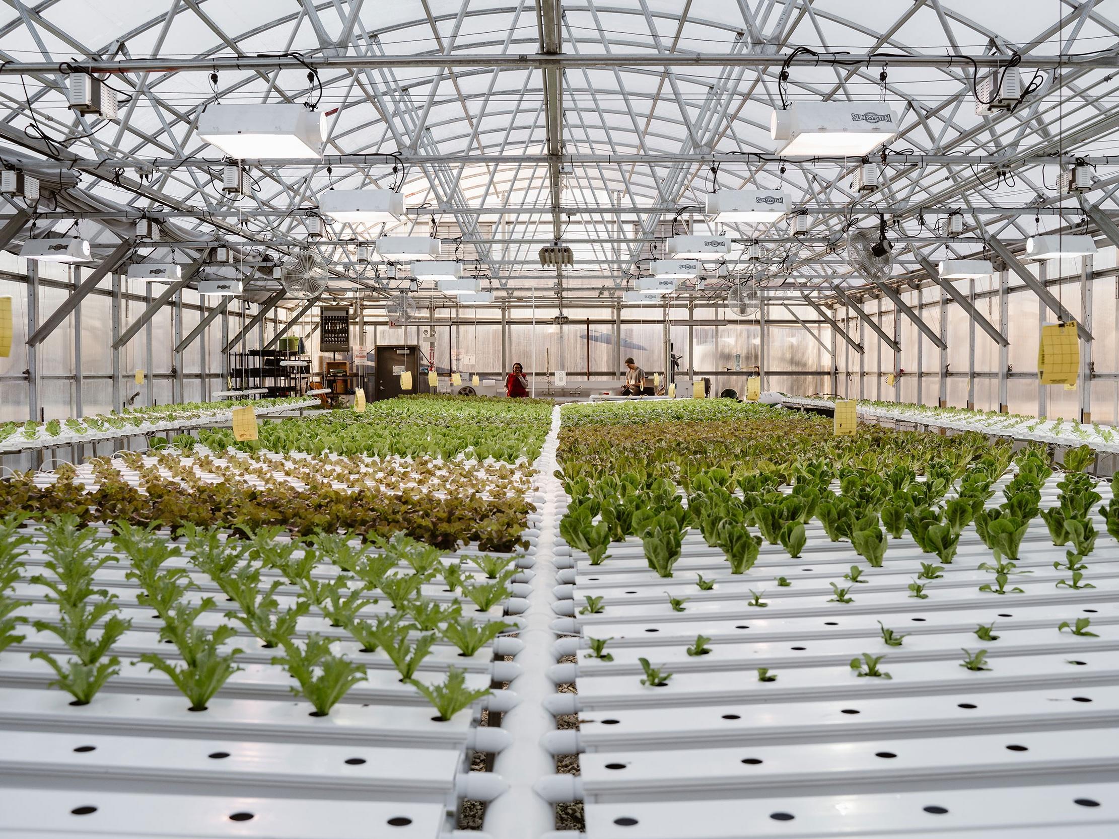 Herban Produce -