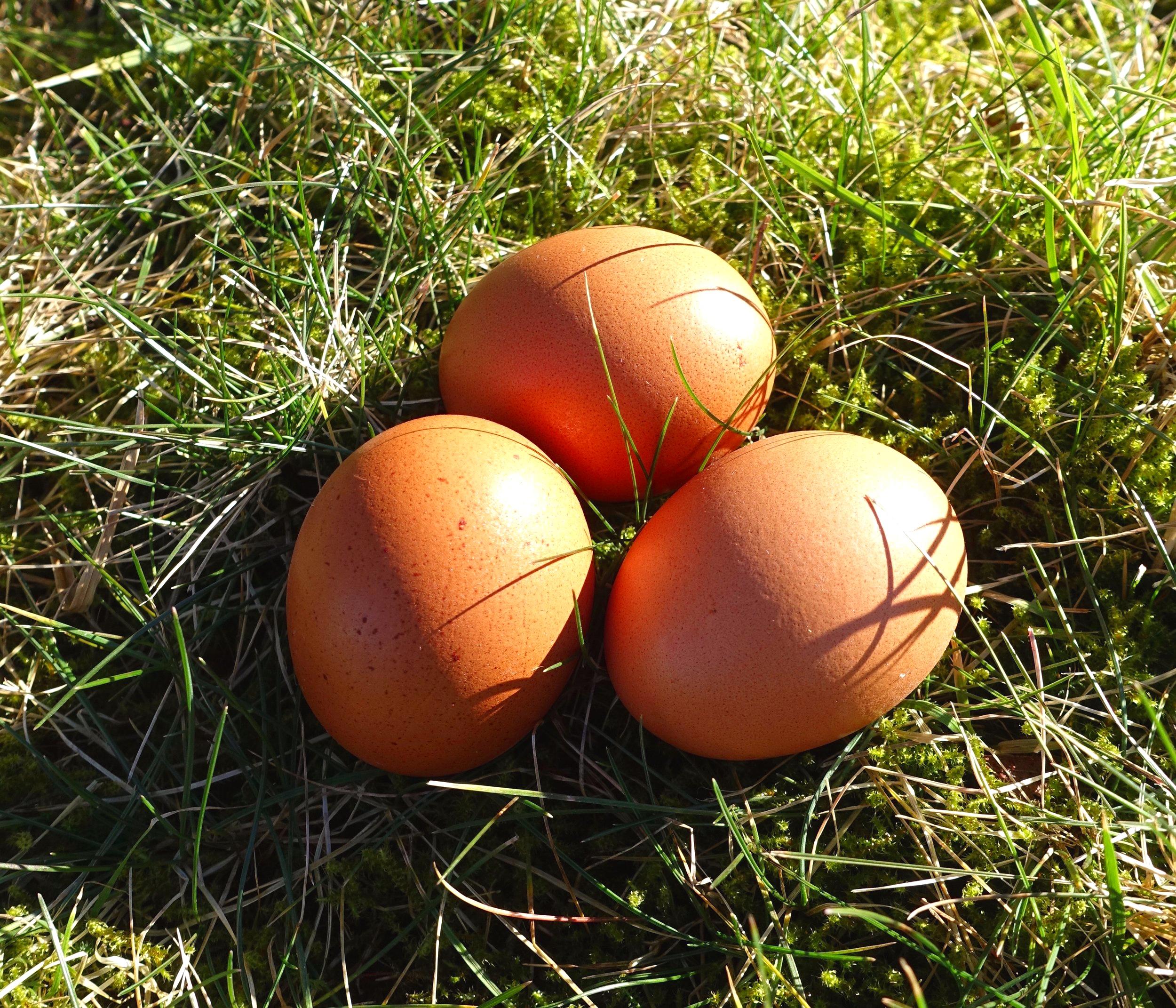 ägg -