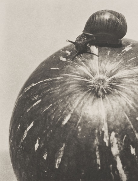Calabaza y Caracol (Squash and Snail) , 1928. Platinum print. SBMA, Gift of Mr. and Mrs. Lorenzo Hernandez in honor of their son, Lorenzo Nicolas Hernandez.