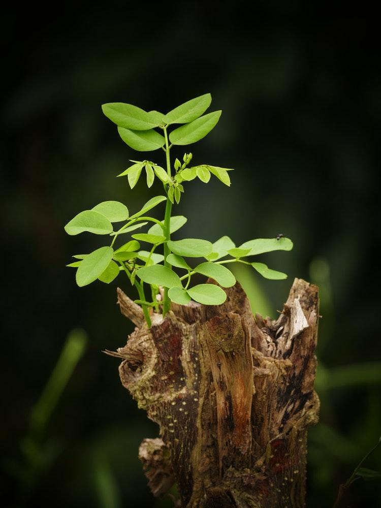 EG-growth3.jpeg