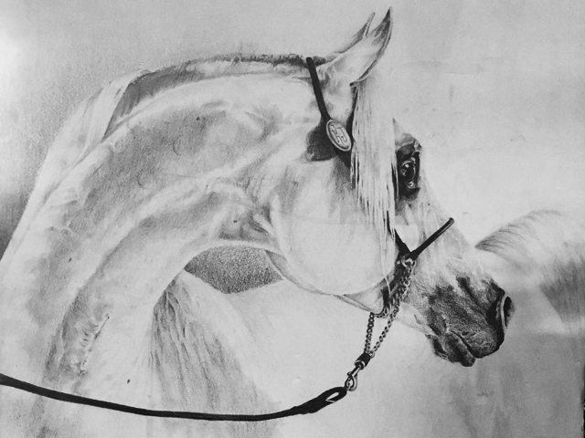 drawing-tabasco-horse.jpg