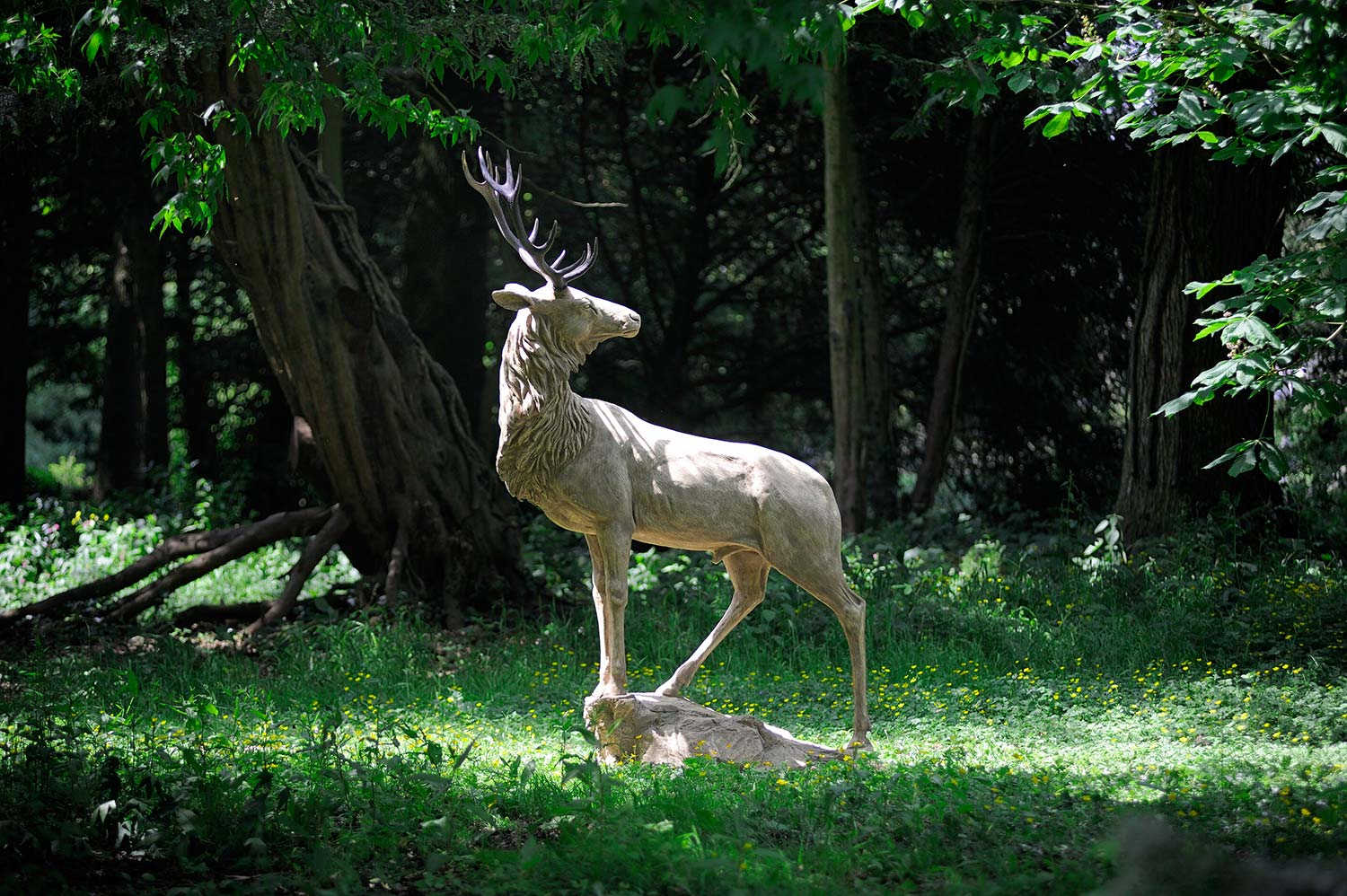 Stag at Gaze