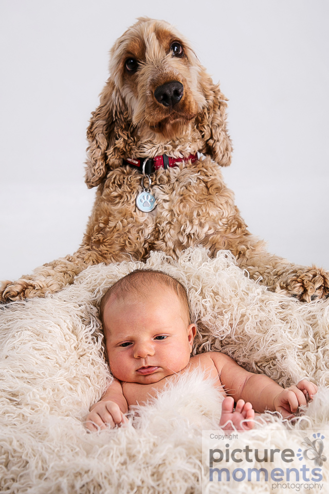 Picture Moments pet family159.JPG