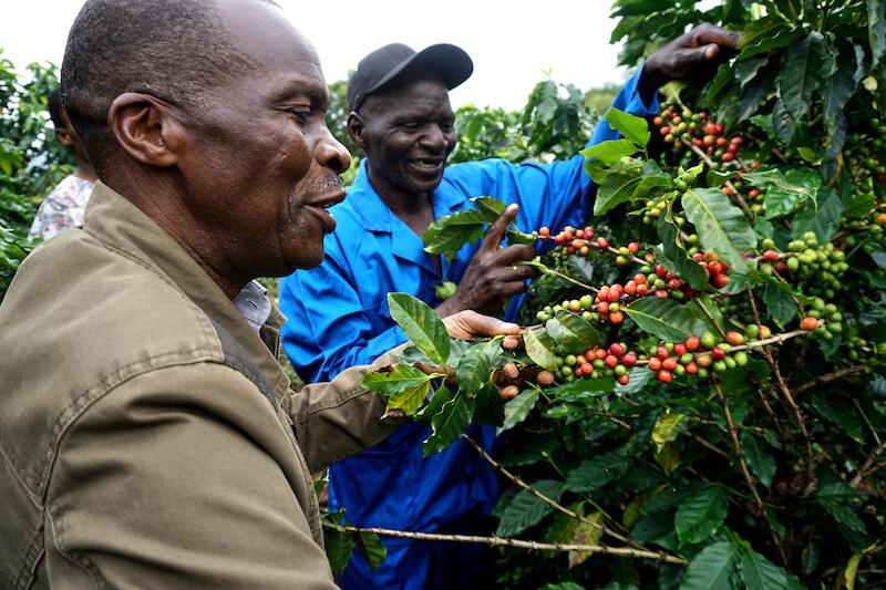 nicole-motteux-sustainable-coffee-advocate-zimbabwe-honde-valley-12.jpg