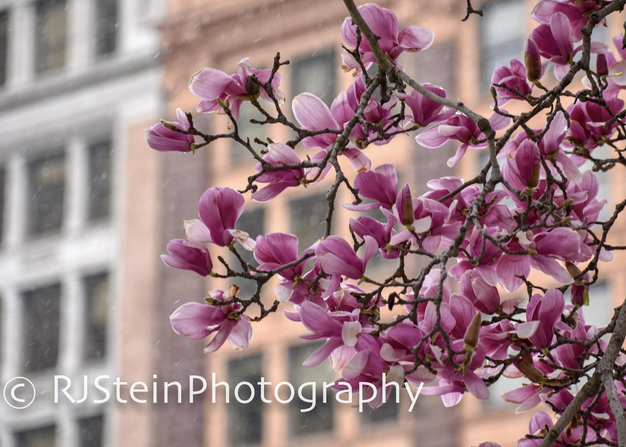 magnolia city, pittsburgh, 2018