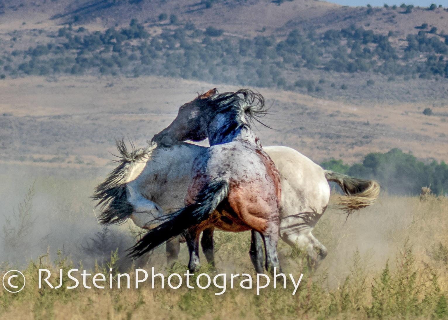 serpentine stallions, utah, 2018