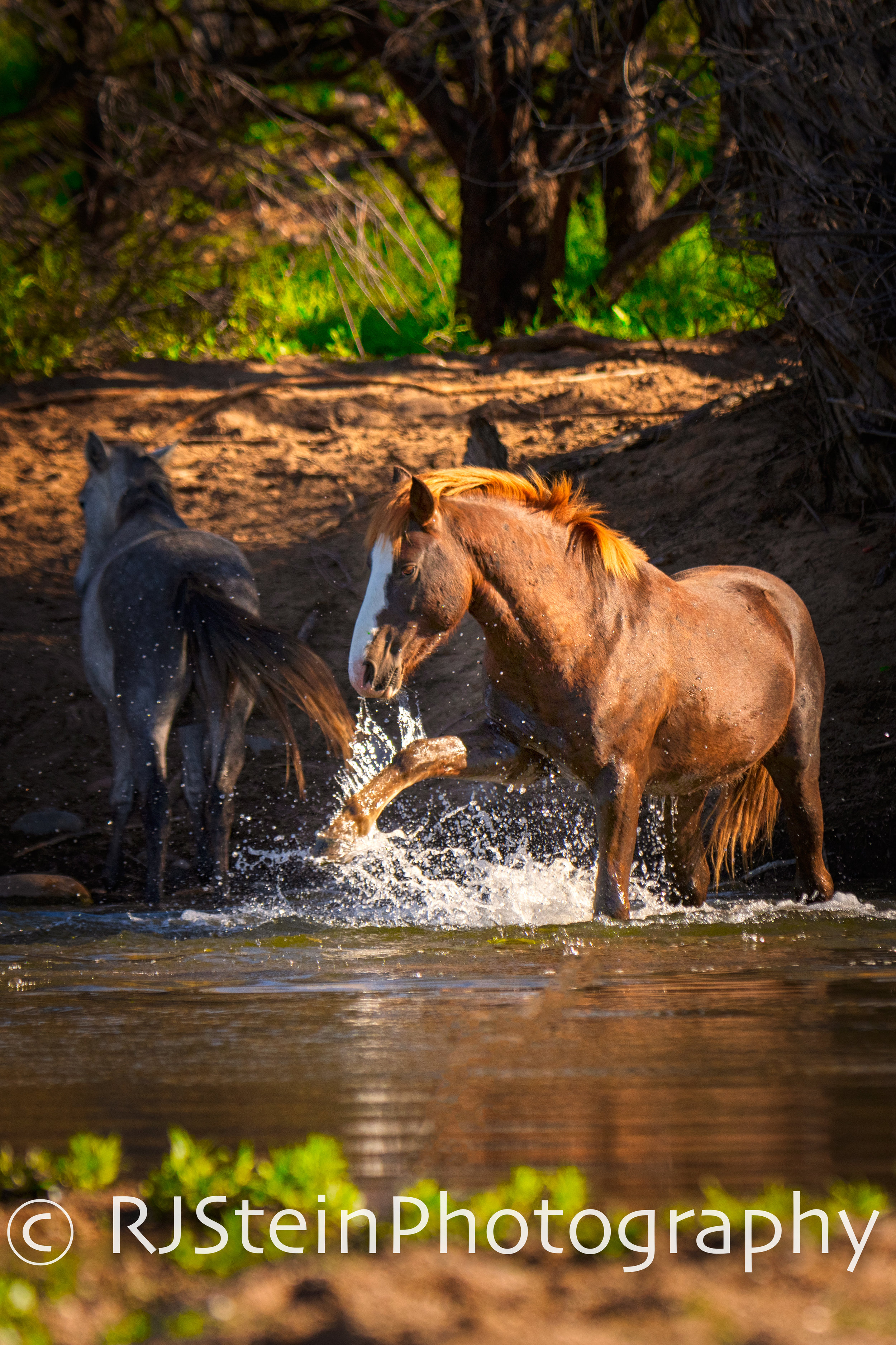 river dance, arizona, 2019