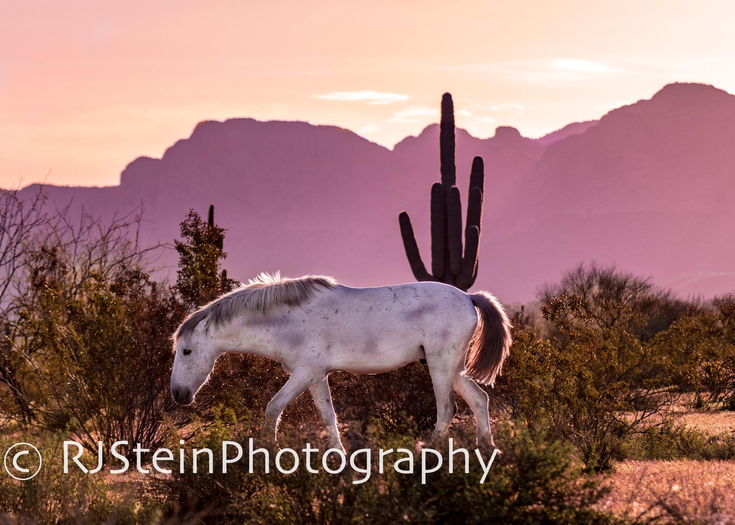 morning glow, arizona, 2019