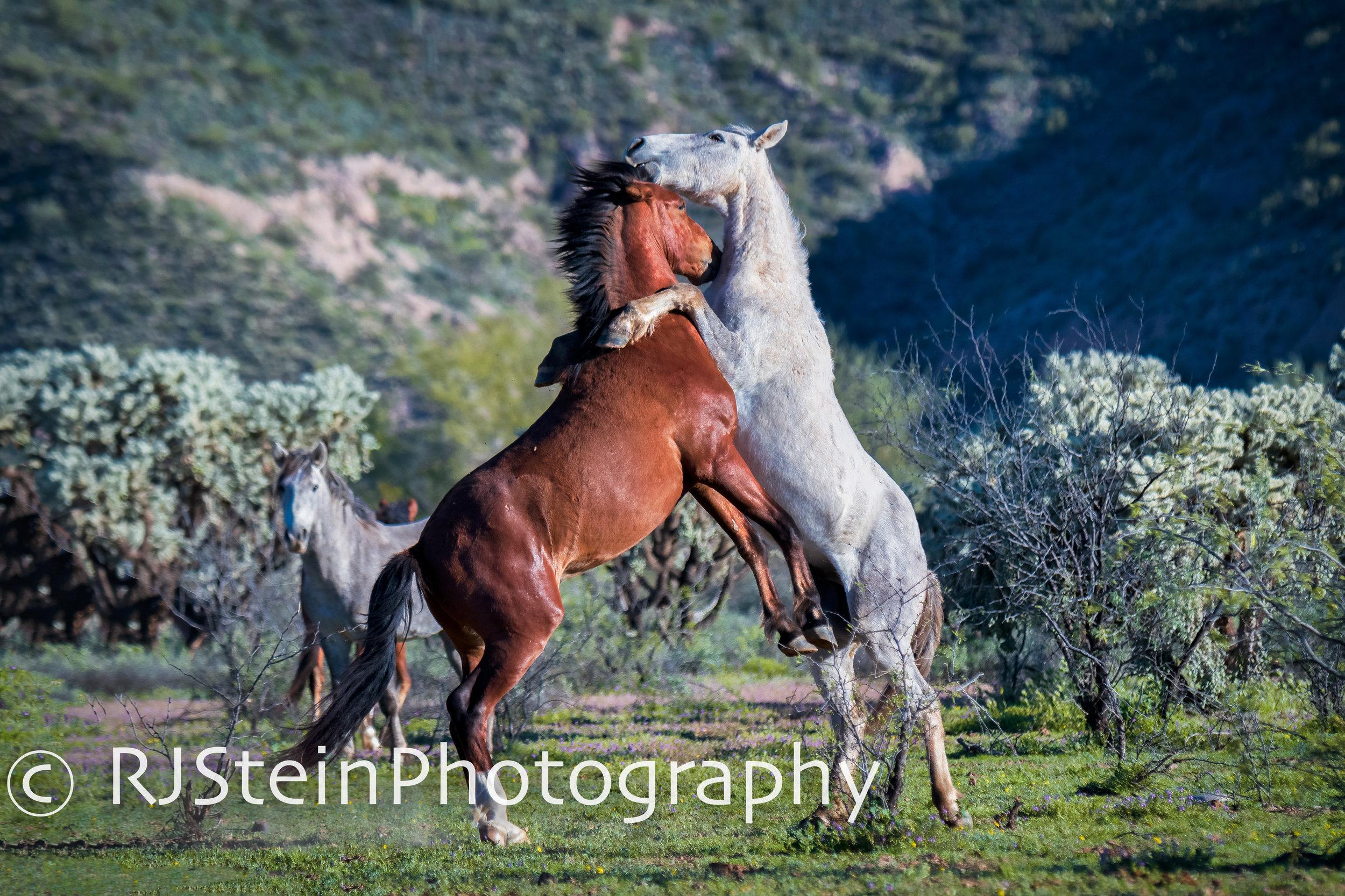 dancing partners, arizona, 2019