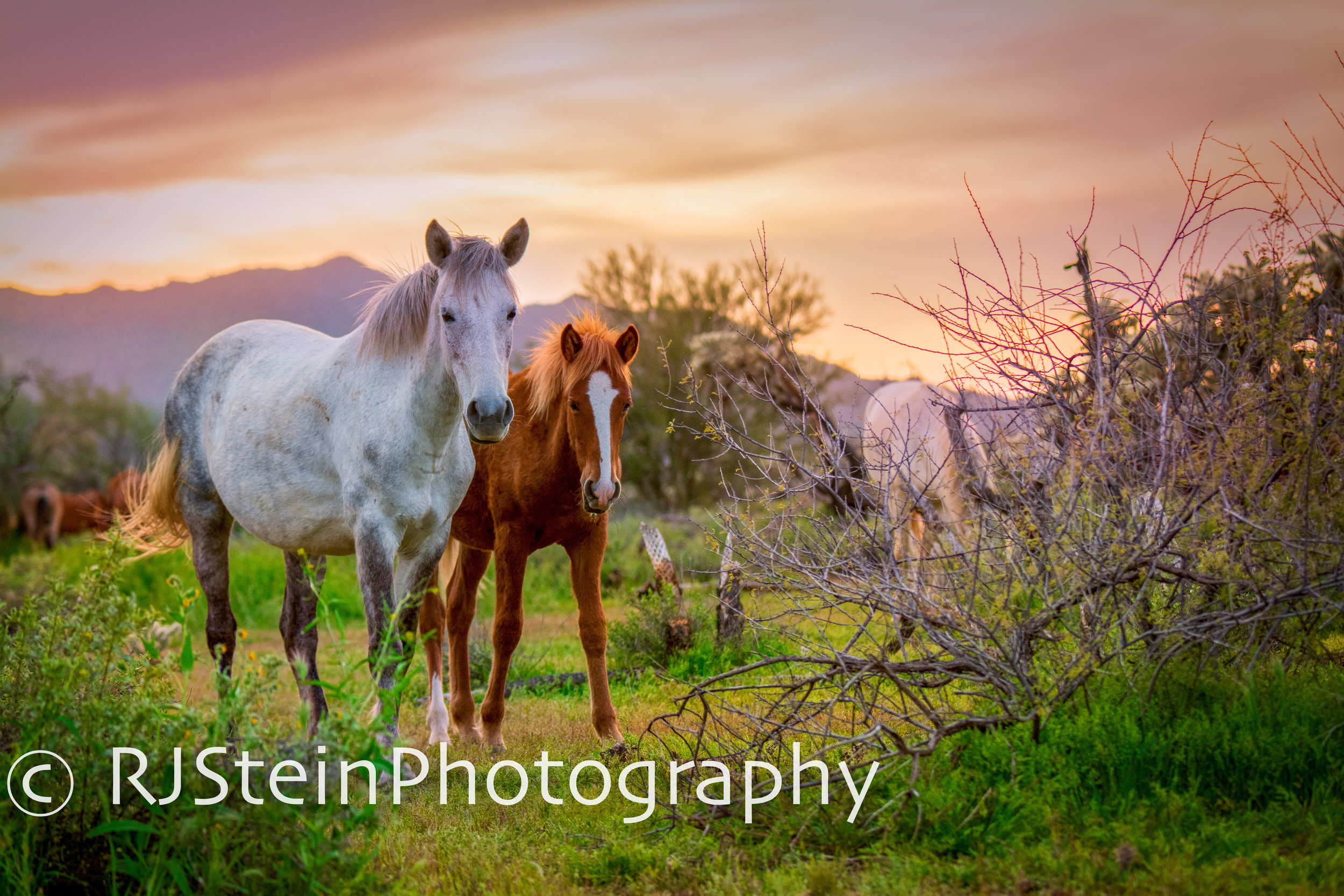 sunset in the desert, arizona, 2019