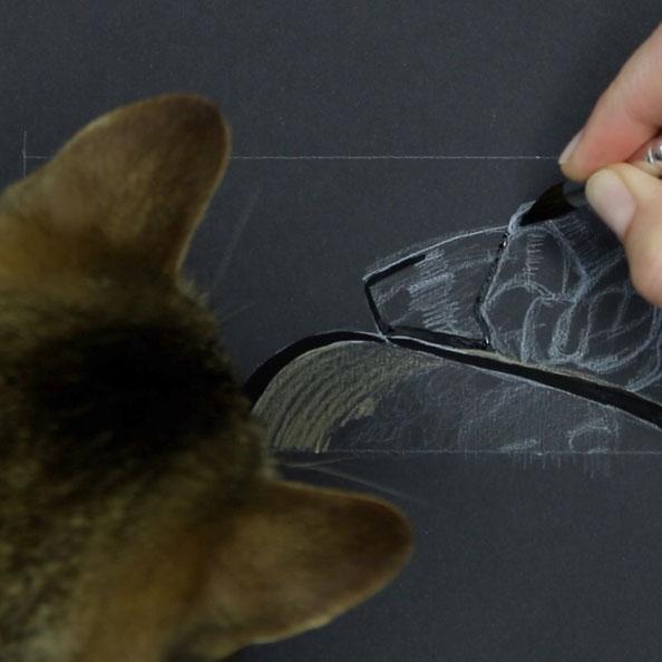 I had a cat inspection…