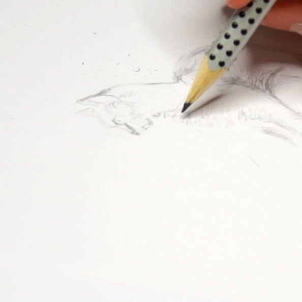 First I draw the cat with pencil. |  Drawing a Cat using Just dots , by The Daily Atelier.