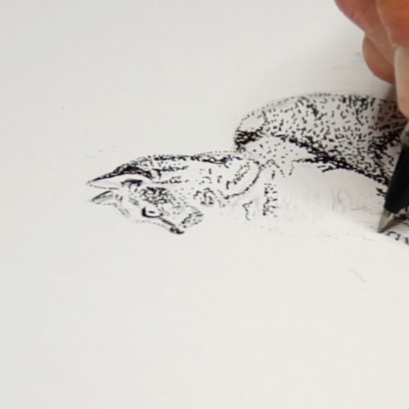 Then I draw the cat with ink using just dots.|  Drawing a Cat using Just dots , by The Daily Atelier.