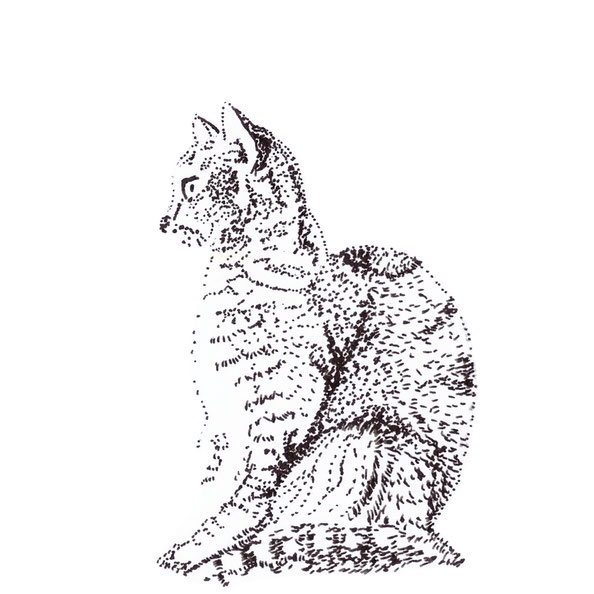 Finished drawing |  Drawing a Cat using Just dots , by The Daily Atelier.