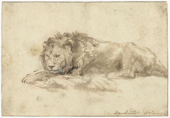 Liggende leeuw.  Rembrandt Harmensz. van Rijn, 1650-1659. Rijksmuseum, De Bruijn-van der Leeuw Bequest, Muri, Switzerland.