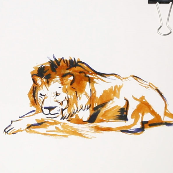 Thirdly, I add blue to create dimension |  Rembrandt and a Lion for my Sketchbook , by The Daily Atelier