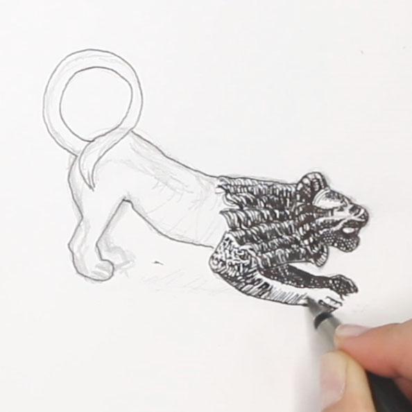 Then, I draw the lion with ink |  A Bronze Lion Ready to Jump from my Sketchbook , by The Daily Atelier