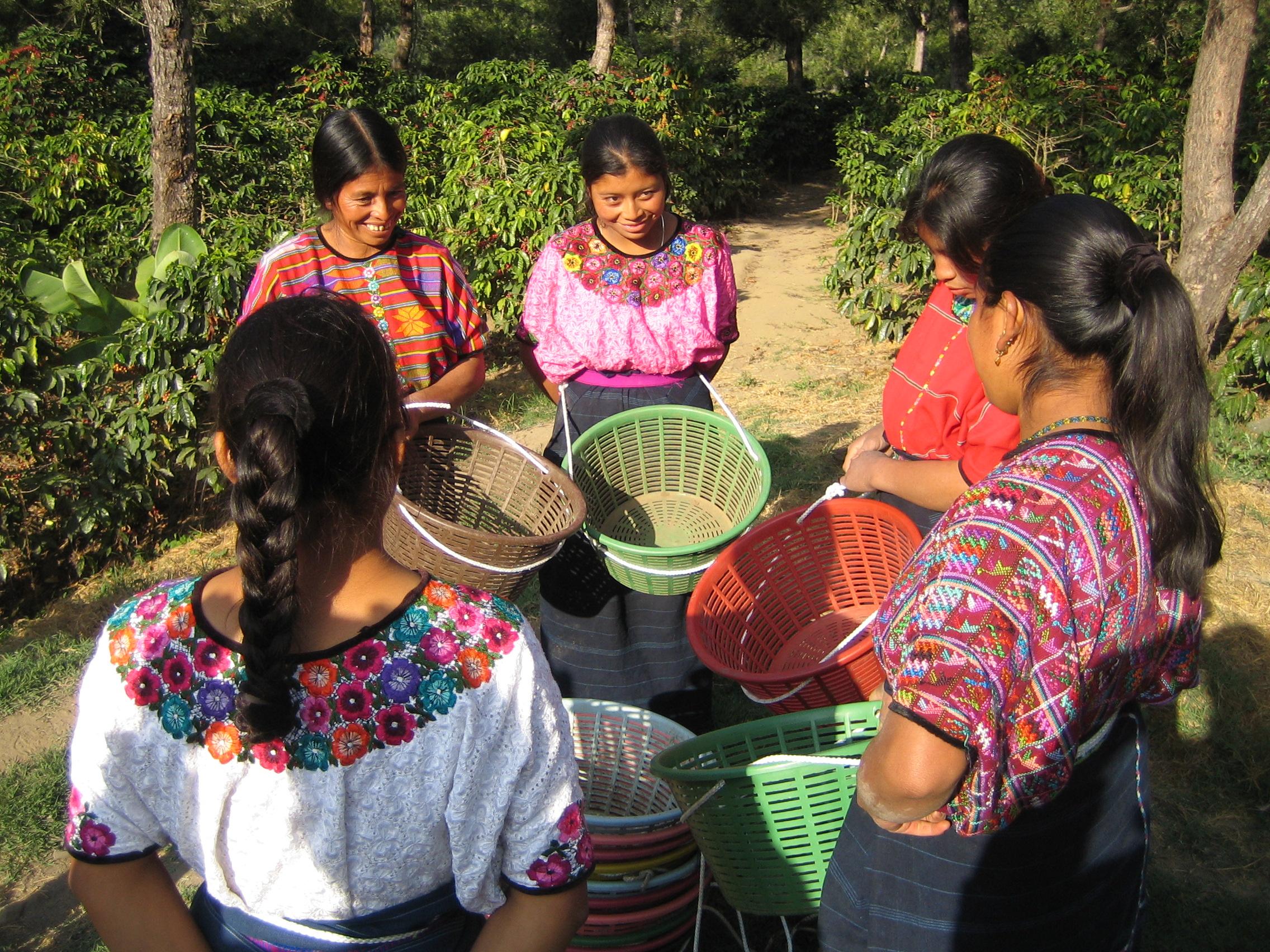 産地視察研修 グァテマラ・エルサルバトル・パナマ - 2009年10月オープンしてから年数もたち、カフェ・バッハの田口先生からのお誘いで初めてコーヒーが作られる現場に行くことができました。自分の商っている商品が、どのように作られて行くのか大変勉強になりました。貧しい中、丁寧にコーヒーを作ってくださる現地の方の作業を見て、日本で自分のできること、もう一度一つ一つ見直して見ました。