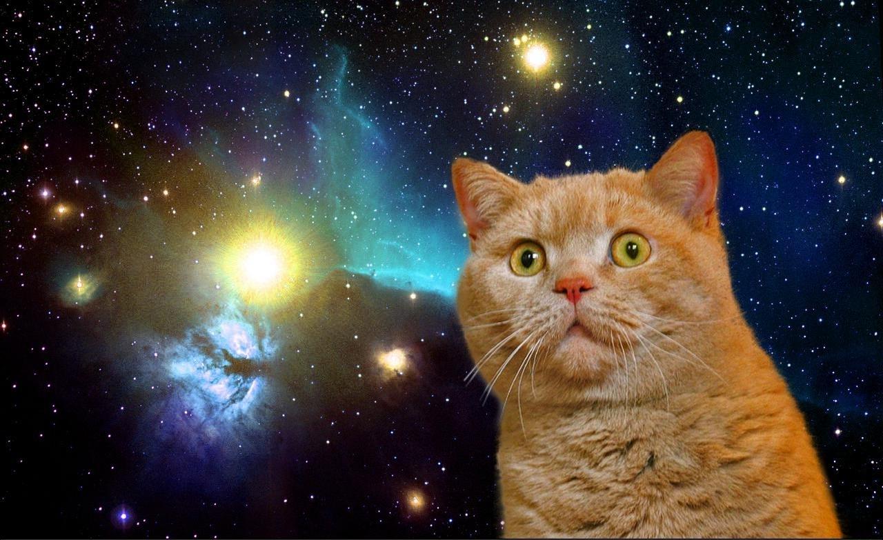 23452_funny_cat_in_space.jpg