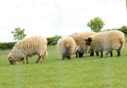 hampton_net_stock_and_lamb_fencing_100.jpg