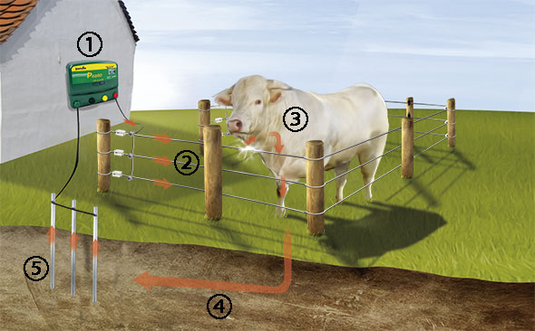 Patura electric fencing.jpg