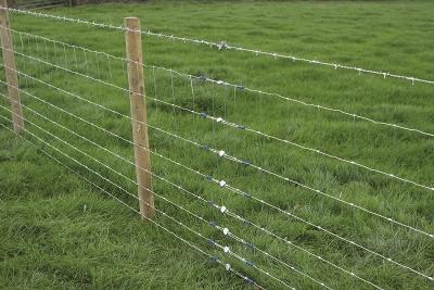 Gripple fence.jpg