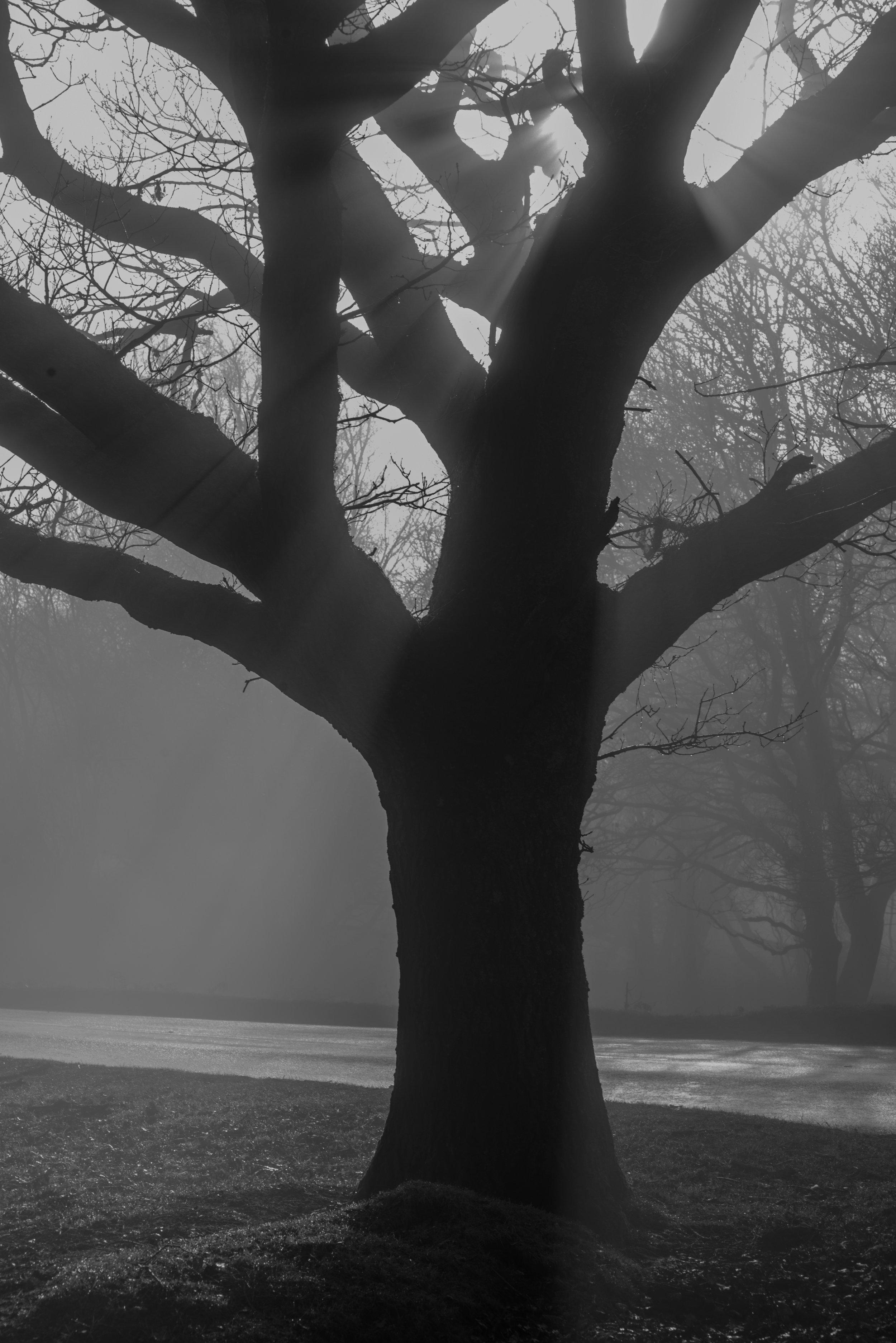 8683bwtree.jpg