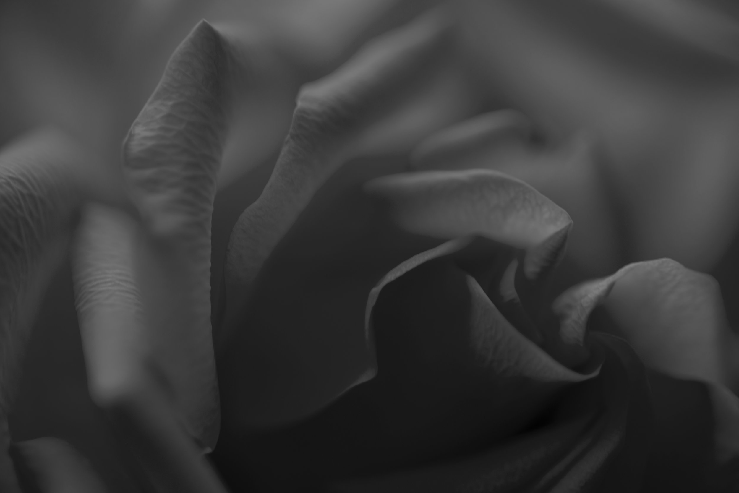 8914bwflower.jpg