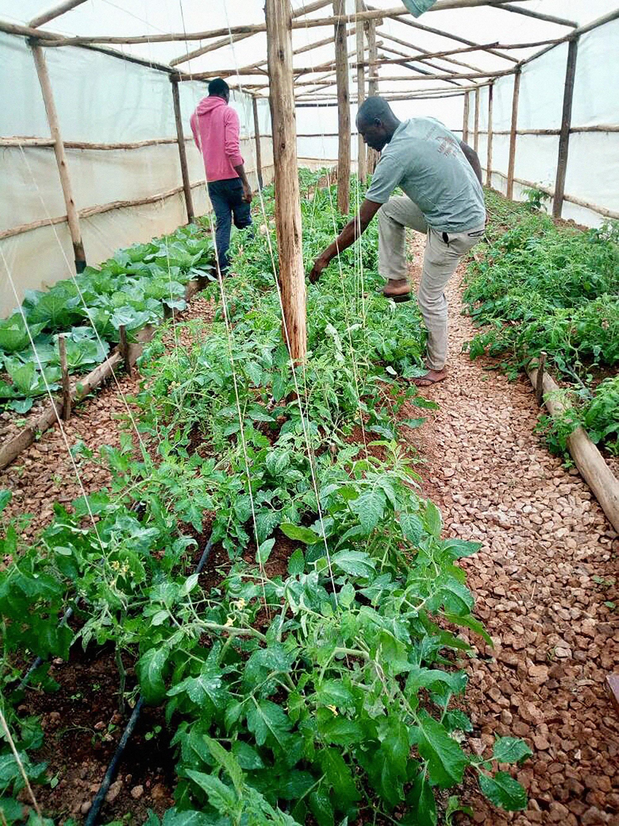 4.22.18 - Greenhouse development 2.jpg