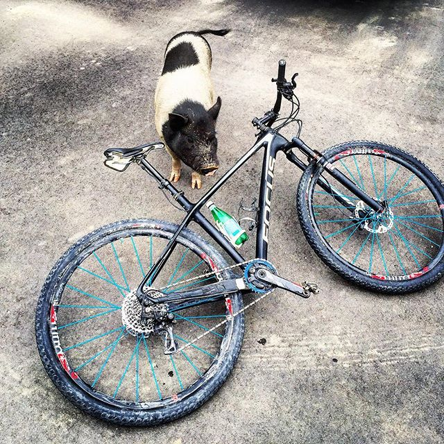 Things we 💗🐷🚵🏻‍♀️ & ✨💦 . . . #mountainbiking #mountainbikes #pigs #sparklingwater