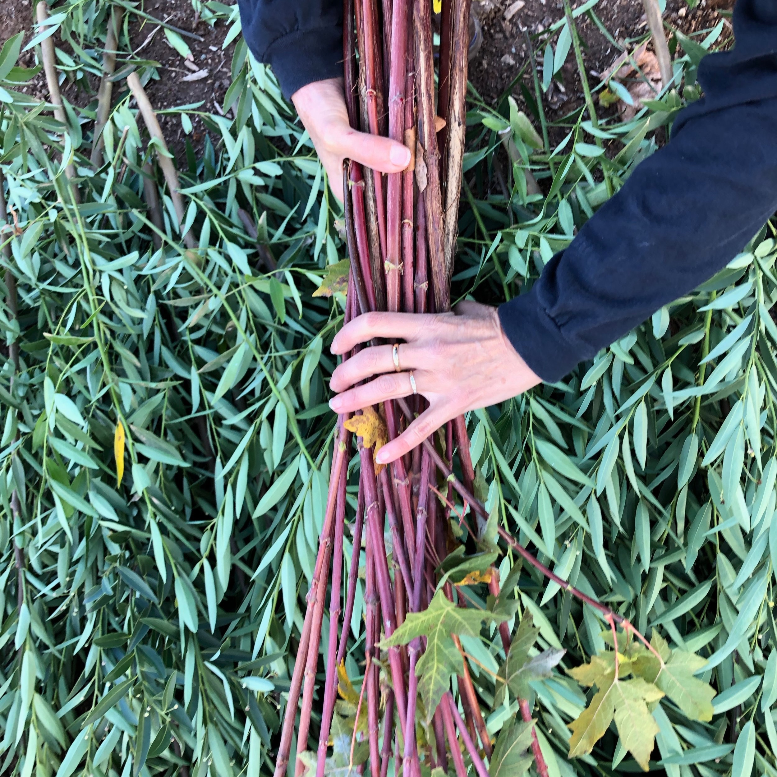 BUNCHED GREENS - Fragrant Bay, Acacia, Native Grasses, Blooms, Jasmine, Ivy, Pittosporum, Bamboo, and more