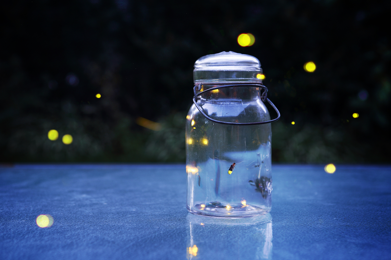 fireflies copy.jpg
