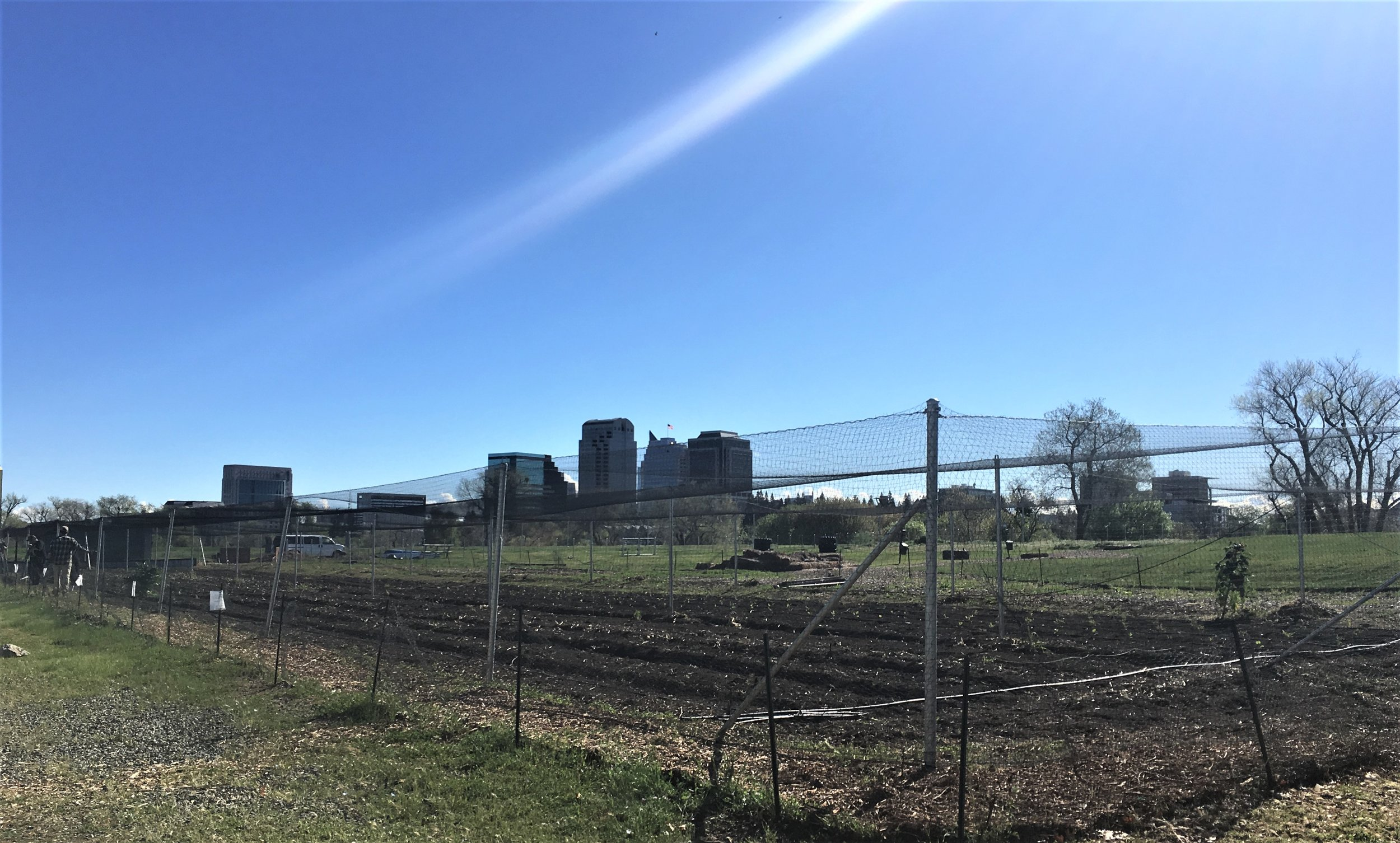 A two-acre urban farm on the riverfront. West Sacramento has five urban farms, one of the most robust programs in the country.