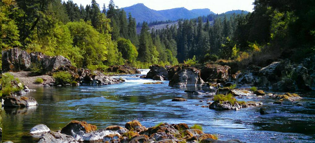 A scenic picture of the Umpqua river in the summer