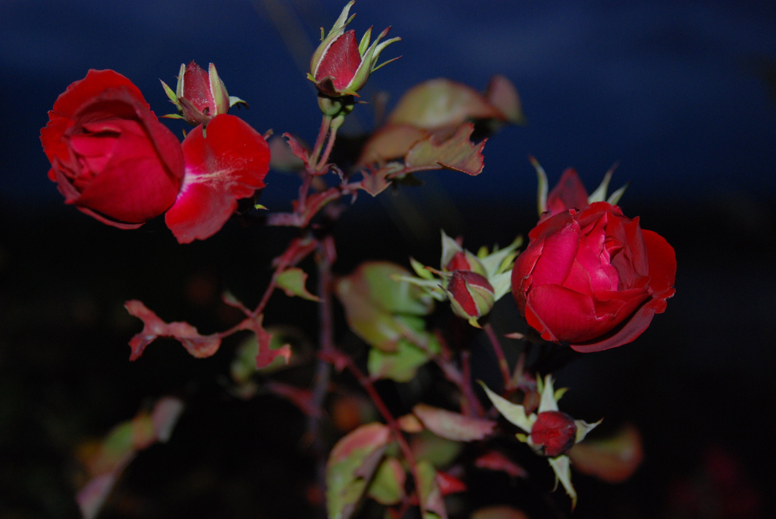 night flower.JPG