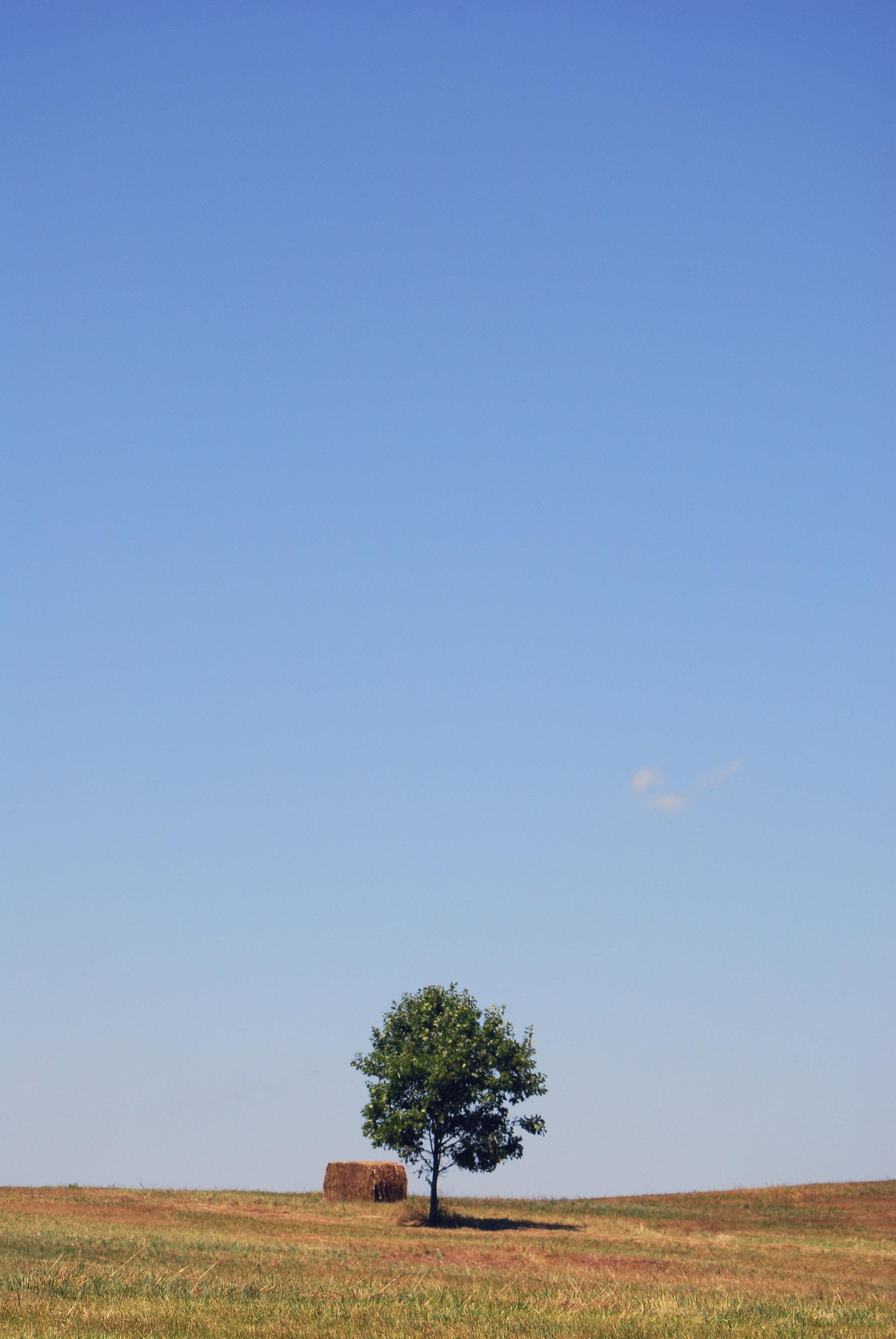July 26, 2011- Roadtrip (DW, PA, NJ Gardens) (69).JPG