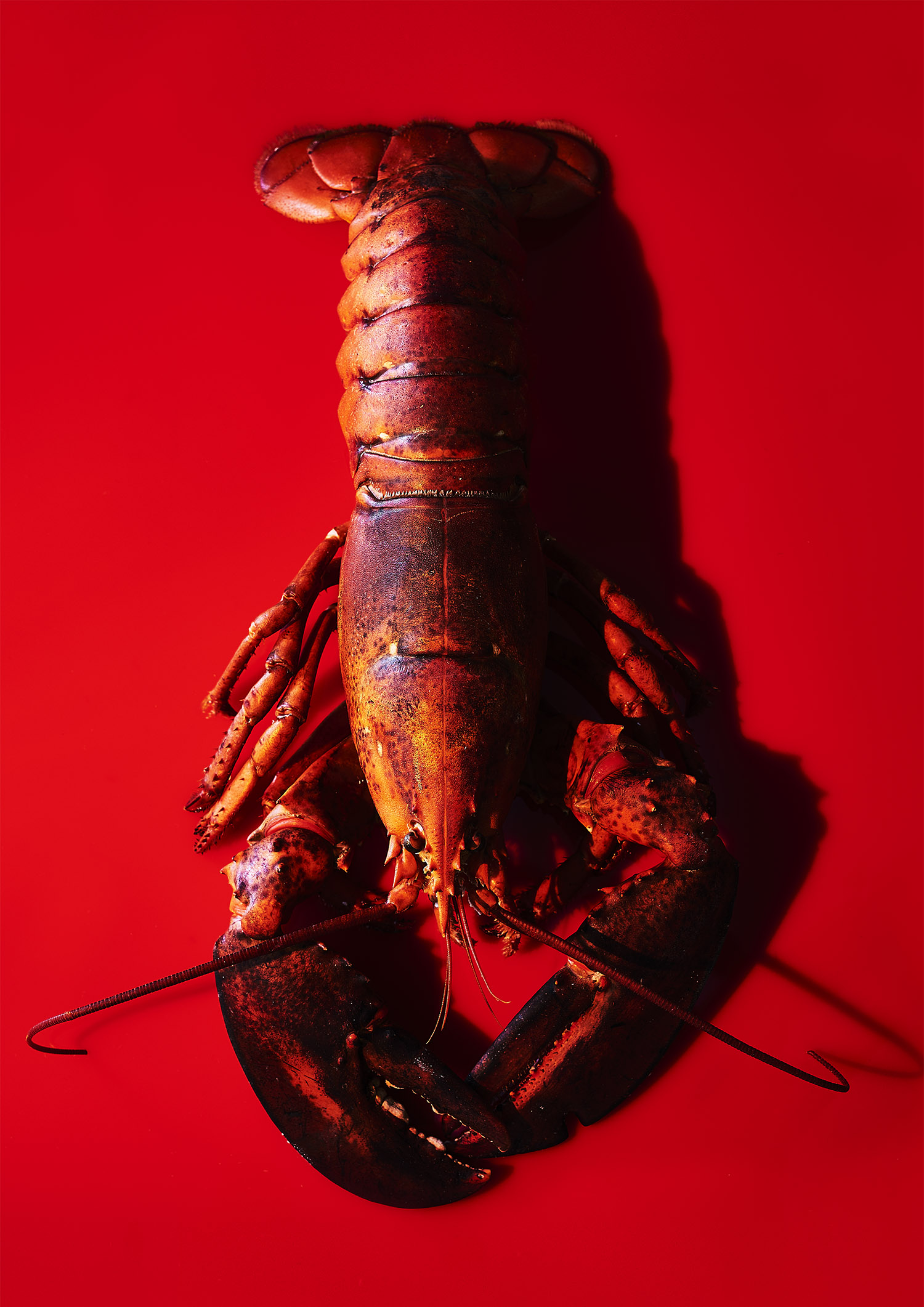 Lobster_A3 copy.jpg