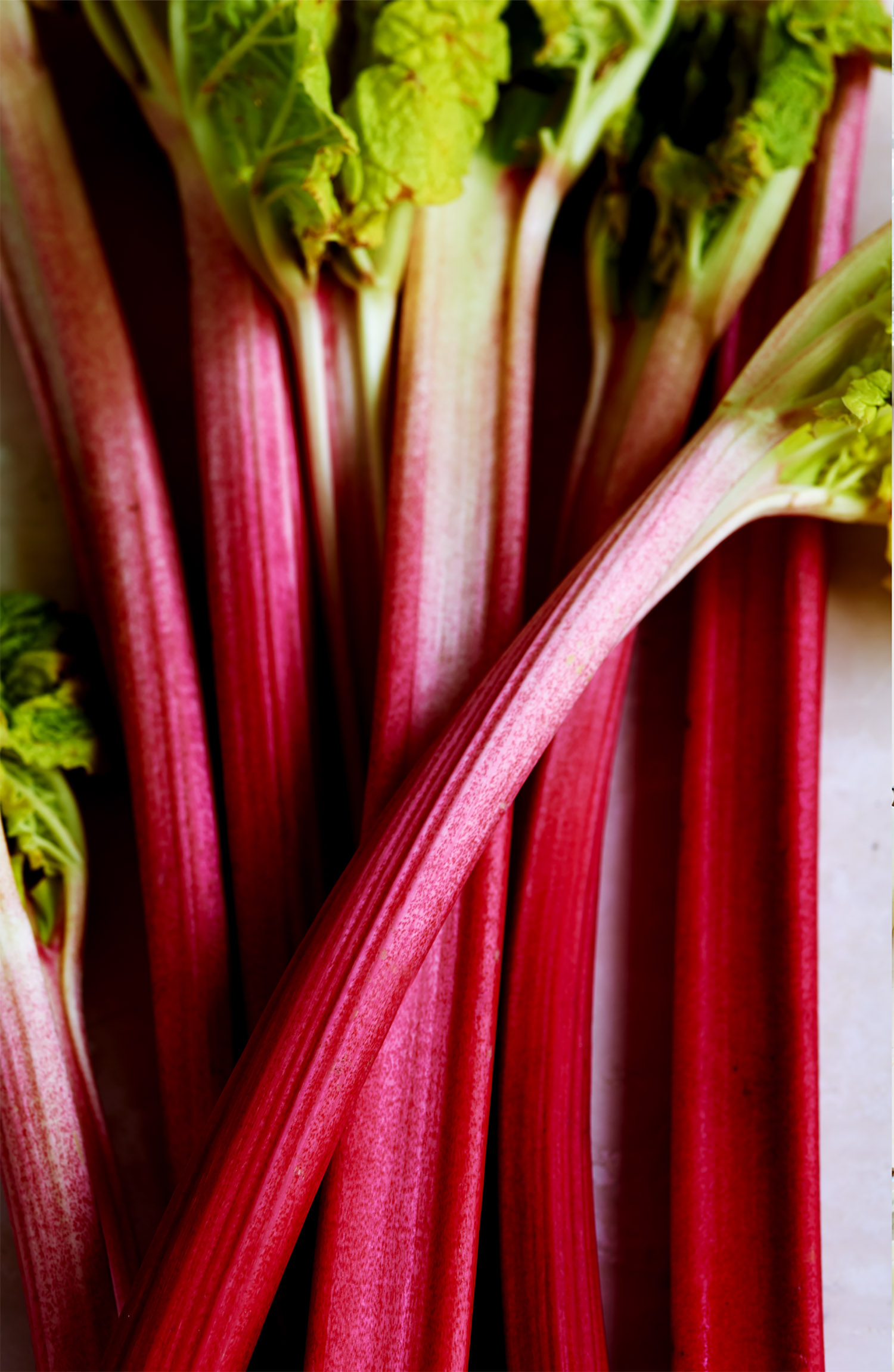 Rhubarbstilllife copy.jpg