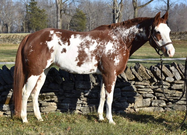 DIRTY BETTY - 2007 APHA registered marePriced in the low five figures